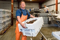 Tom Adams, Maine Coast live lobster facility in York, Maine