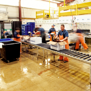 Lobster packing in Maine Coast York facility